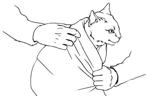 Кошку берешь за живот начинает кашлять. как помочь коту, если он кашляет, как будто подавился