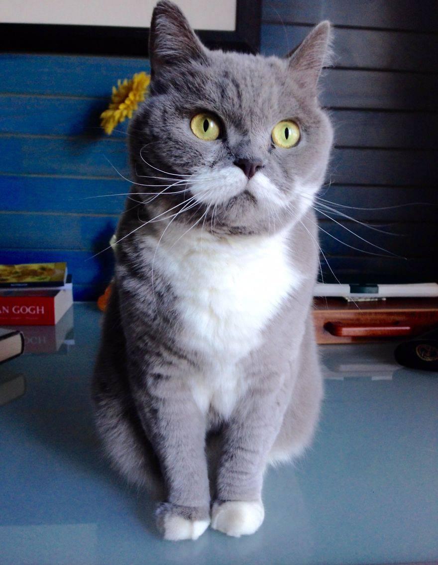 Самые популярные коты в мире: 9 животных, которые стали звездами сети