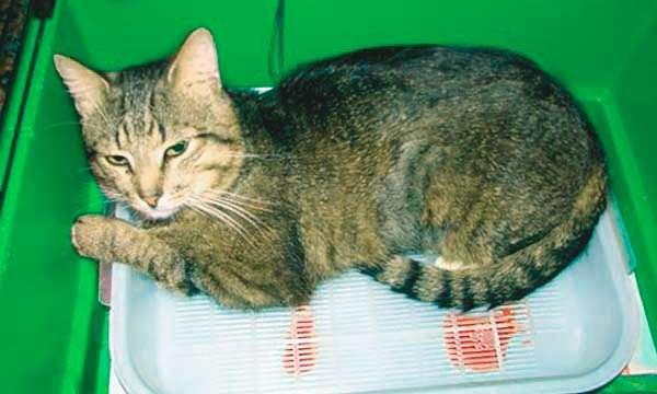 От чего бывают болезни почек у кошек