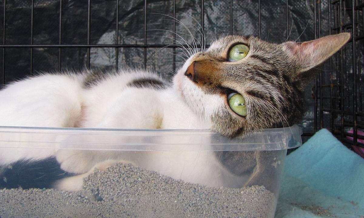 Куда поставить лоток для кошки?