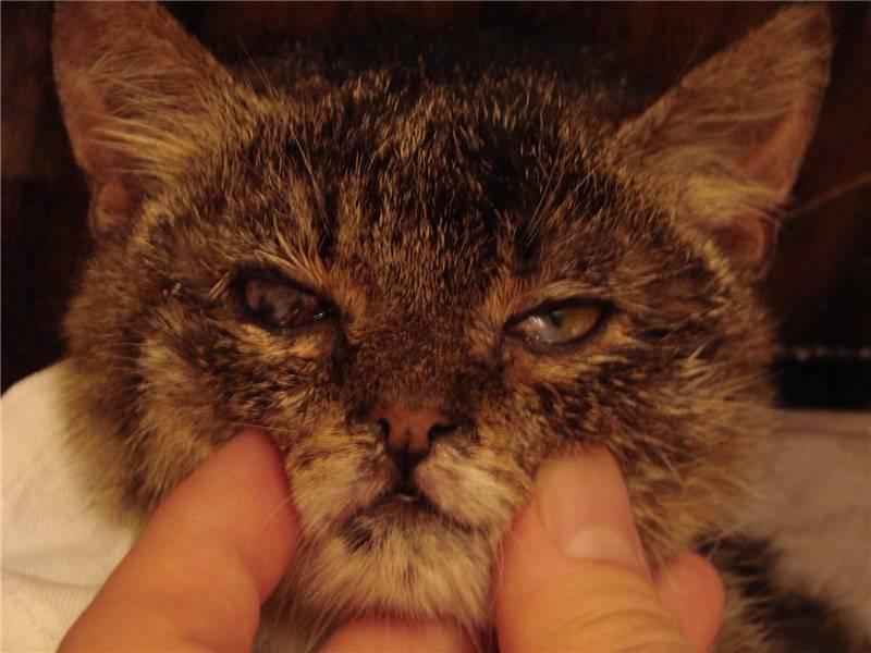 Кошка чихает и кашляет