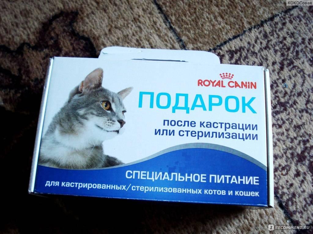 Чем и как можно кормить кошку после стерилизации или до нее, каким кормом