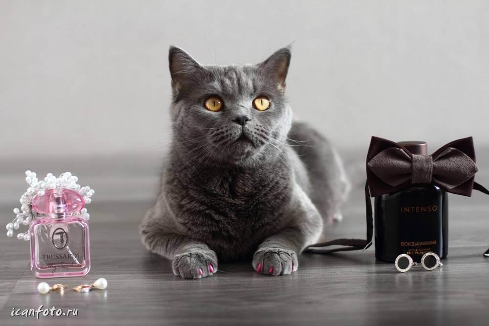 Свадебные коты