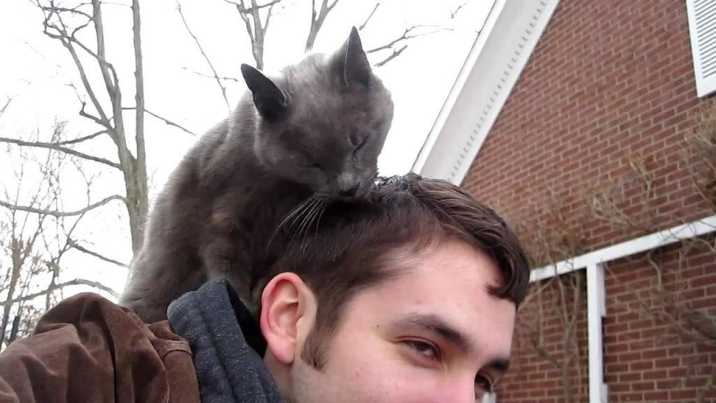 7 причин почему кот лижет голову и волосы - kotiko.ru