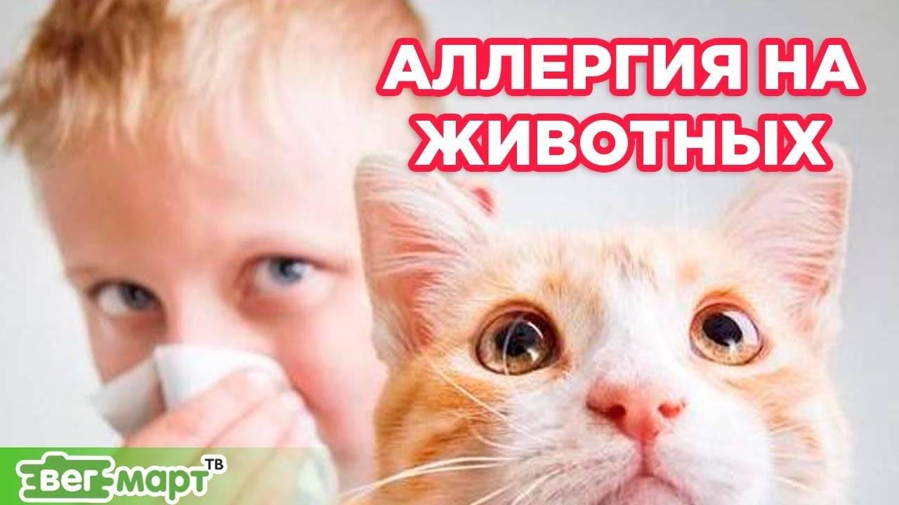 Как избавиться от аллергии на кошек: симптоматика и лечение