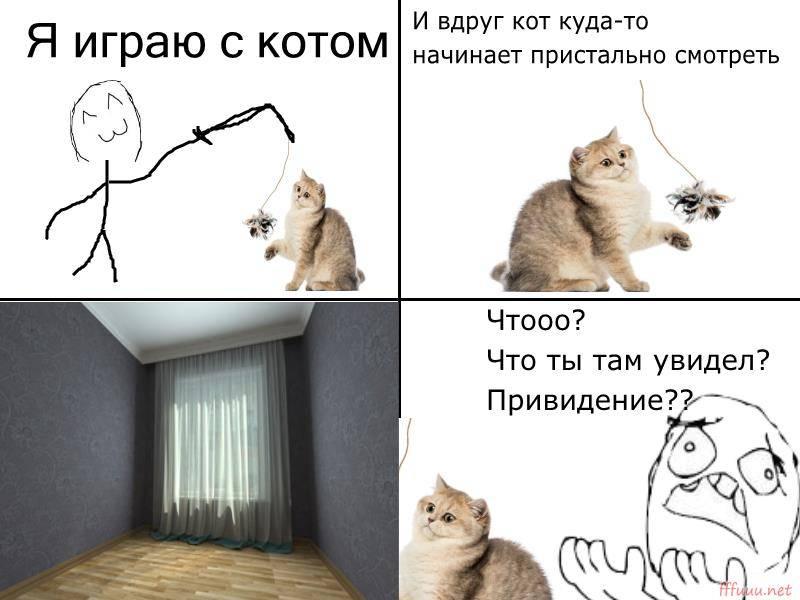 Почему кот смотрит в одну точку? - zhivomag