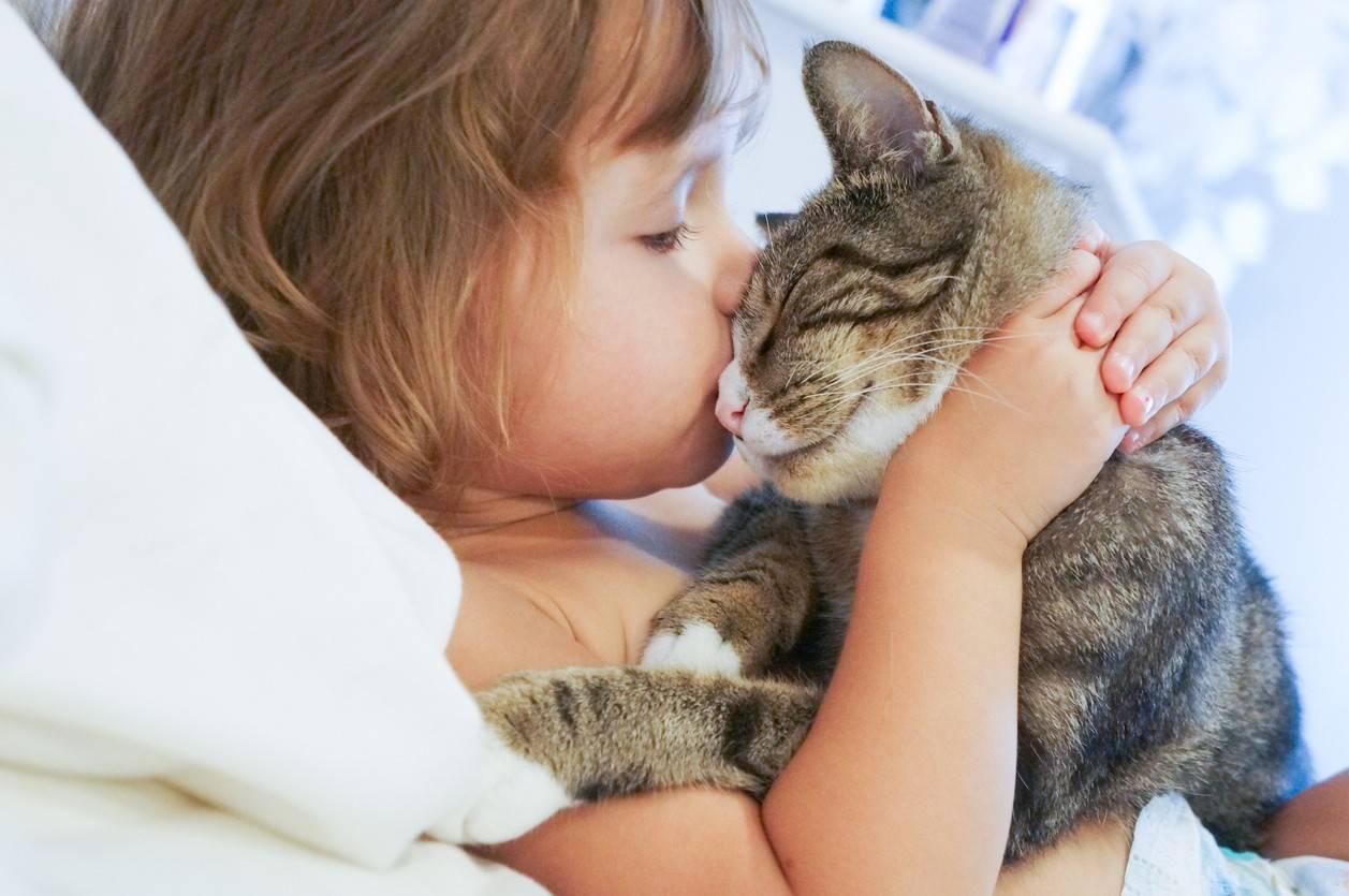 Почему нельзя обнимать и целовать котов и кошек