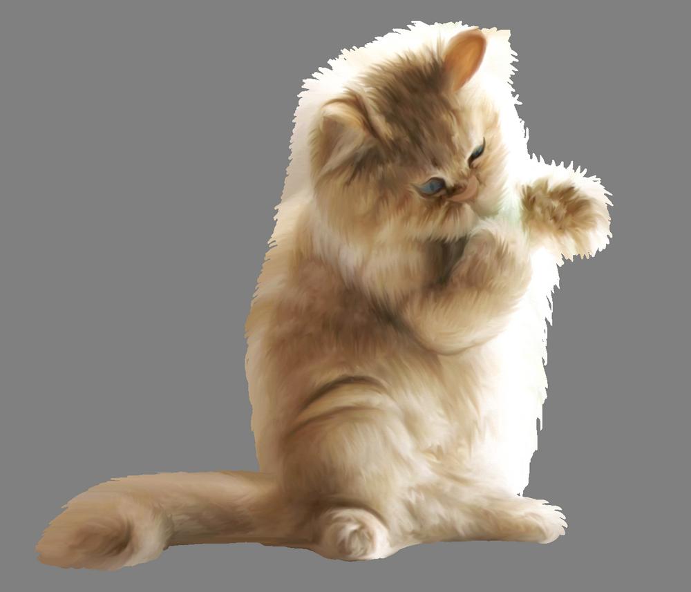 Главные причины, почему кошка гадит на постель, и верные шаги по пресечению пакостей