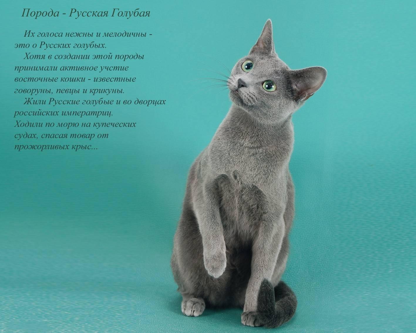 10 самых редких и необычных пород кошек