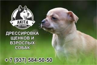 Как защитить собаку от клещей: важно знать