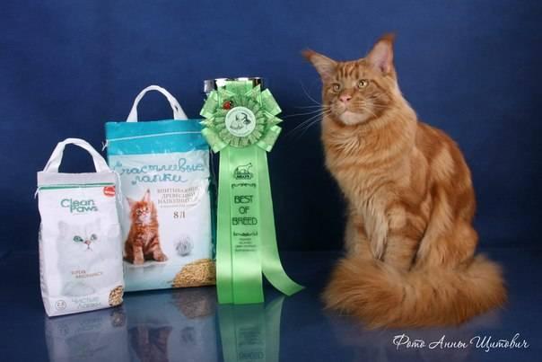 Корм для мейн-кунов: рейтинг сухих продуктов для котят и взрослых кошек разного класса