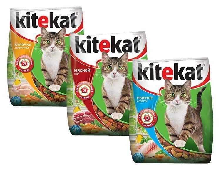 Корм для кошек — как и из чего делают?
