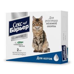 После вязки кошка продолжает просить кота — беременна ли она?