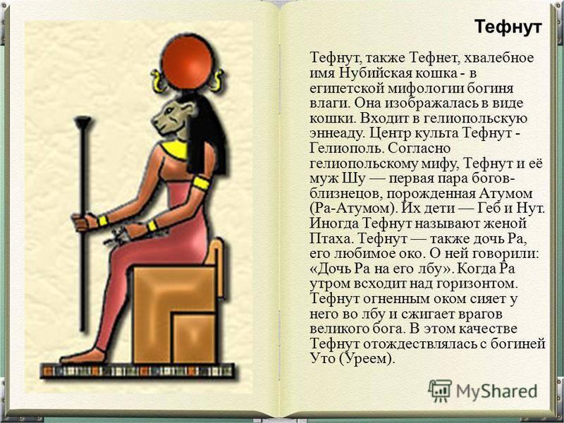 Египетская кошка богиня: история и культ кошек в египте