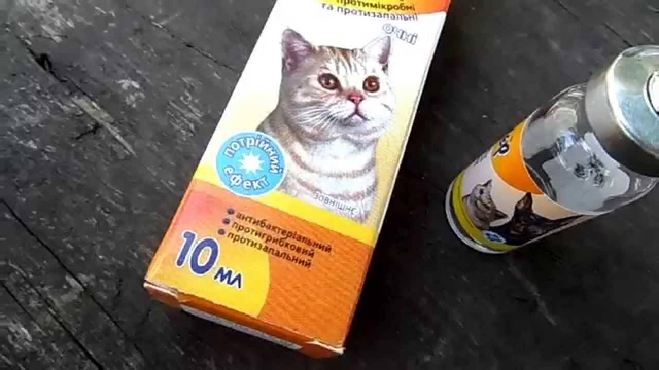 Простуда у кошек: симптомы, диагностика, лечение