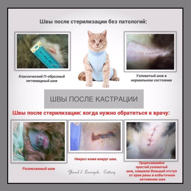 Почему кошки после операции по стерилизации или кастрации не едят и не пьют, что с этим делать?