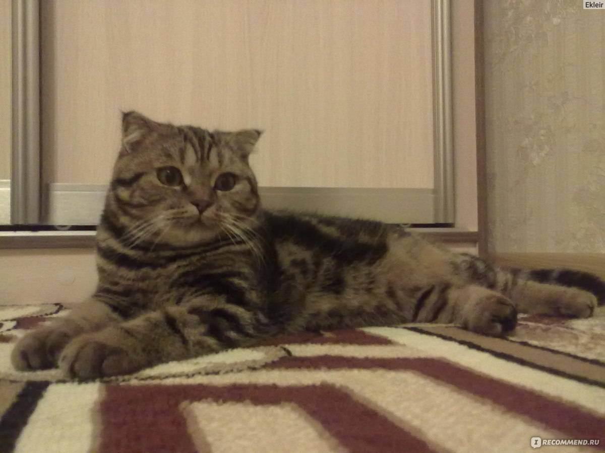 Как правильно стричь кошкам когти?