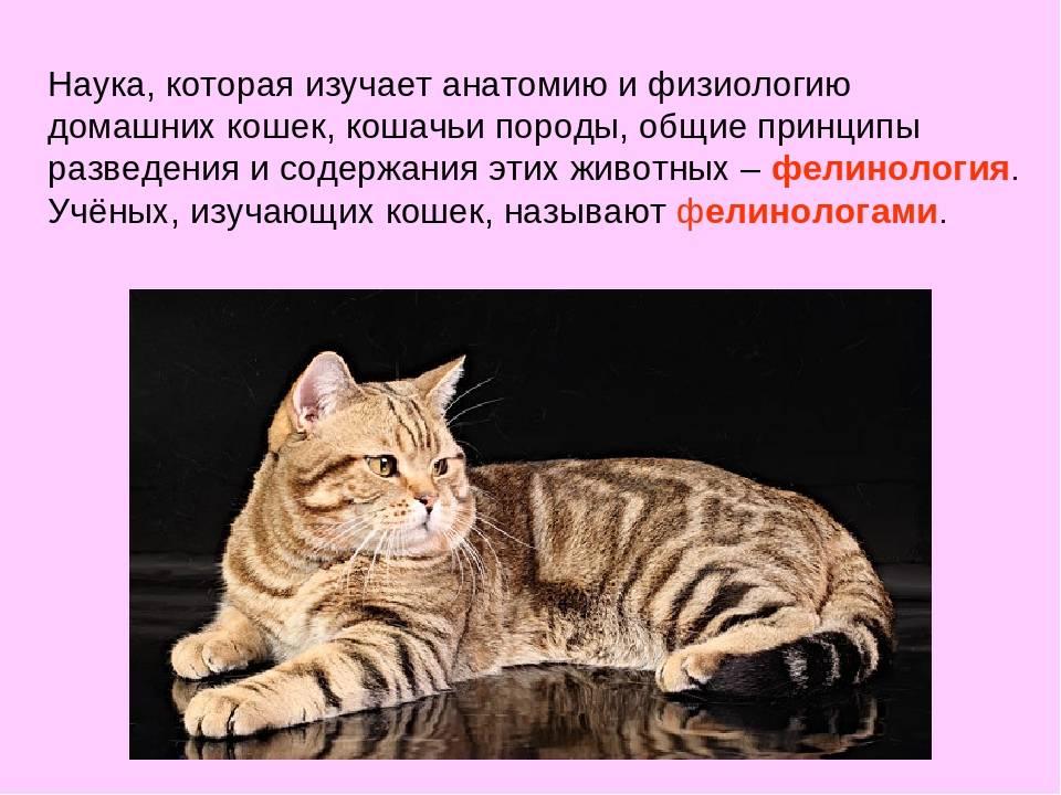 Наука о кошках: как называется научная дисциплина, изучающая представителей семейства кошачьих?