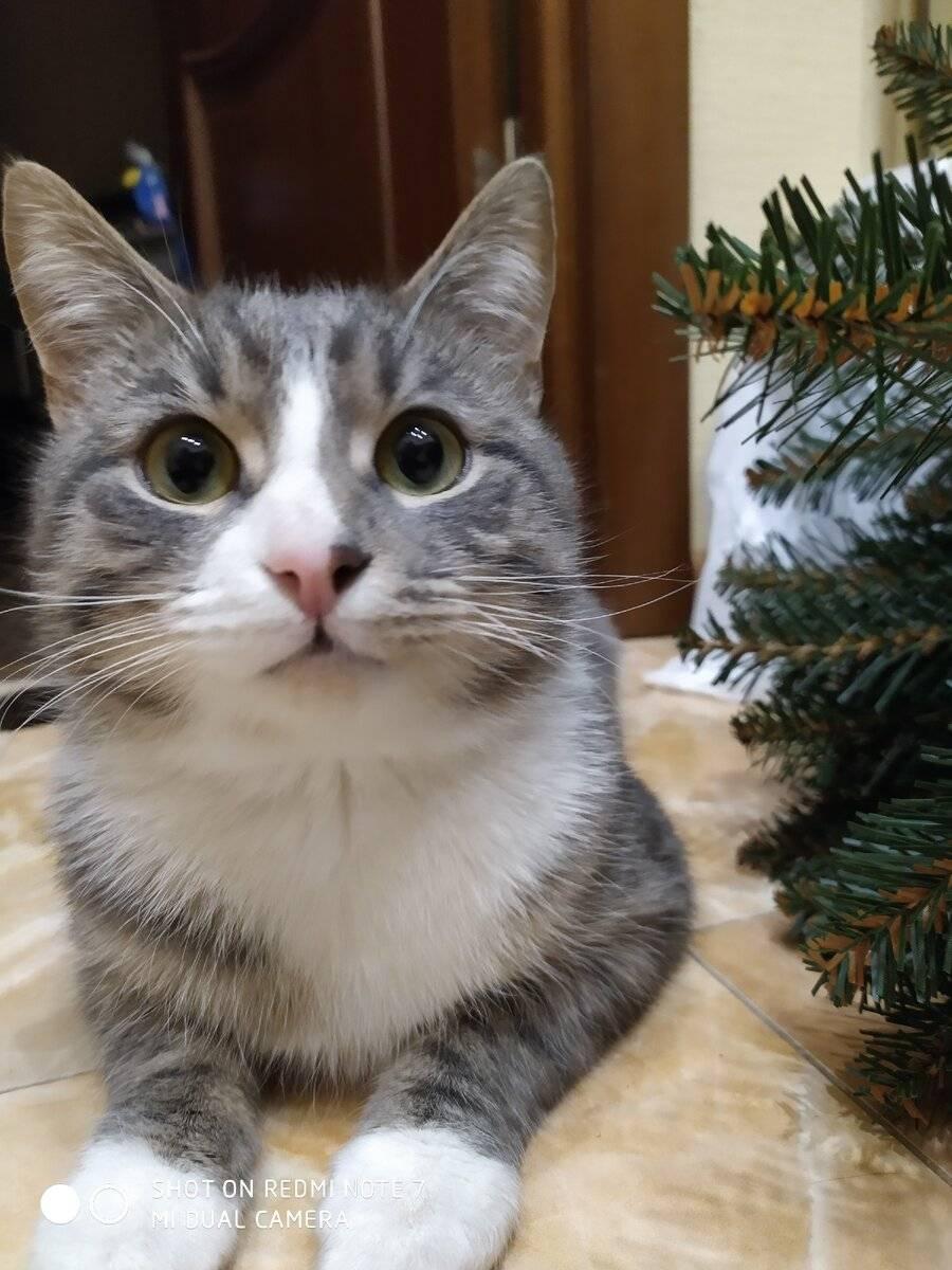 Кастрация кота: все за и против