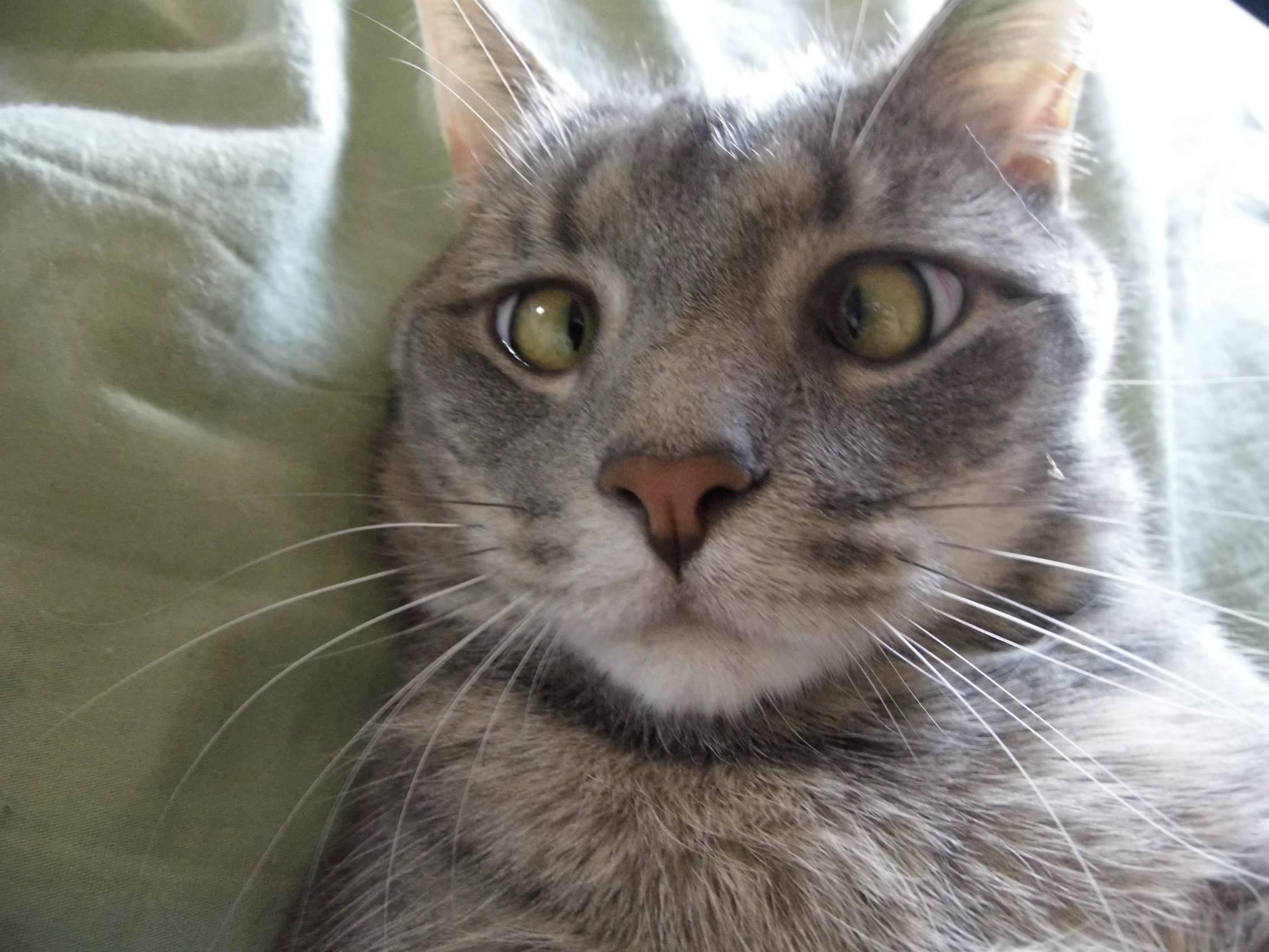 Косоглазие – причины и лечение страбизма у кошек