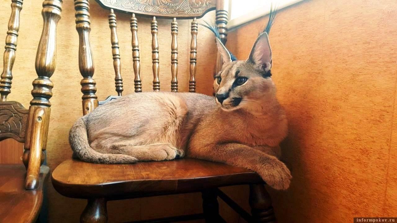 Несколько любопытных законов имеющих отношение к кошкам