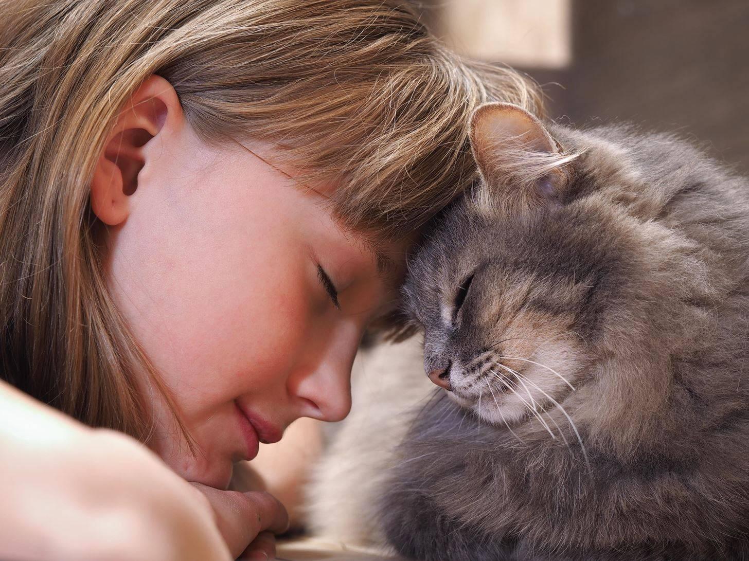 По каким причинам кошки вылизывают друг друга и хозяев