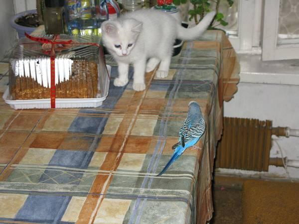 Кот или кошка - кого выбрать   мои домашние питомцы