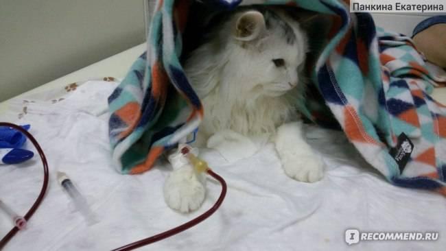 Гемотрансфузия животным