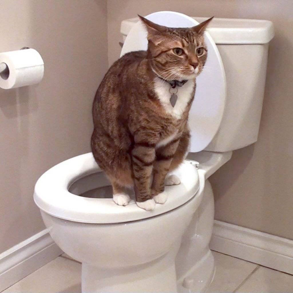 Если кот мало мочится