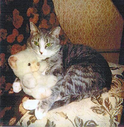 Сочинение кошка мое любимое животное с описанием