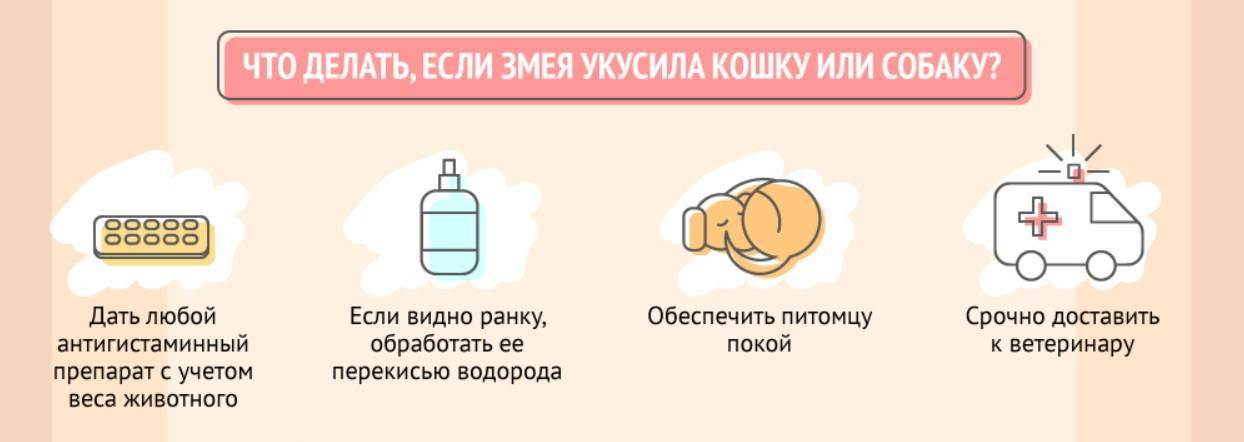 Укусы котов лечение в домашних условиях - муркин дом