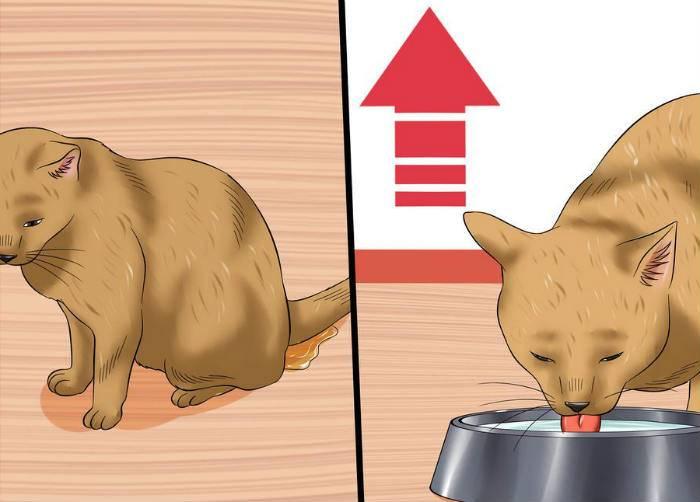 Проблемы с гормонами или гипотереоз у кошек: сложно выявить, практически невозможно вылечить