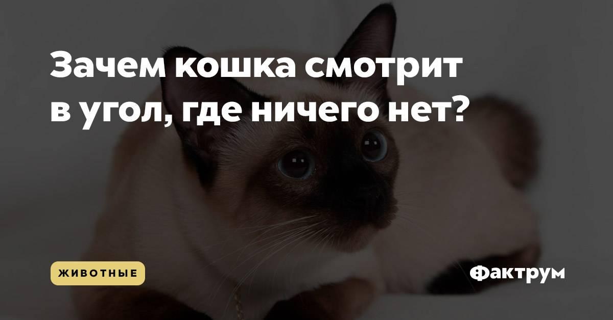 Почему кот долго смотрит в глаза. почему моя кошка смотрит на меня? можно ли долго смотреть кошке в глаза: реалистический подход