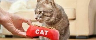 Почему кошка перестала есть привычный сухой корм, который раньше ей нравился, что делать?
