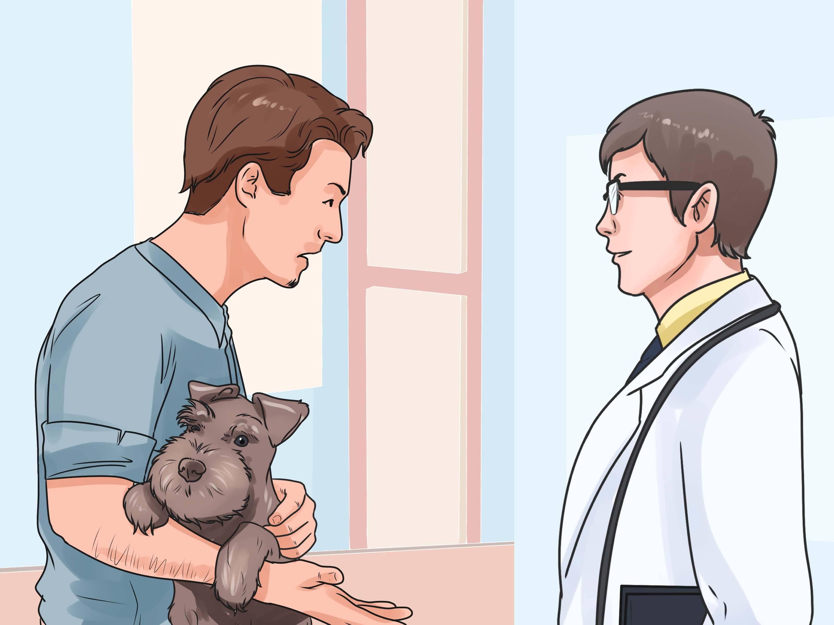 Что делать, если собака подавилась: экстренная помощь питомцу