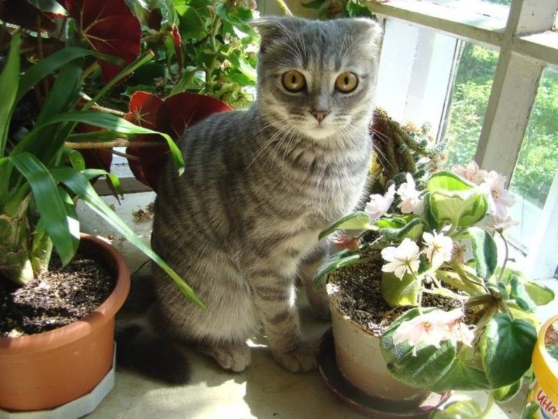 Как отучить кошку лазить в цветочные горшки, есть цветы или использовать грунт в качестве туалета: 6 действенных методов