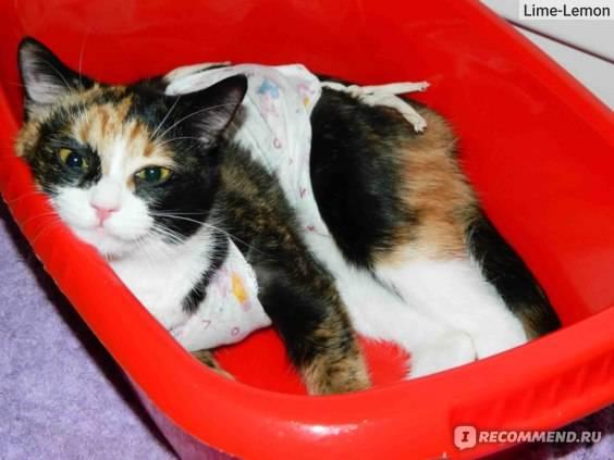 Все самое важное о стерилизации кошек