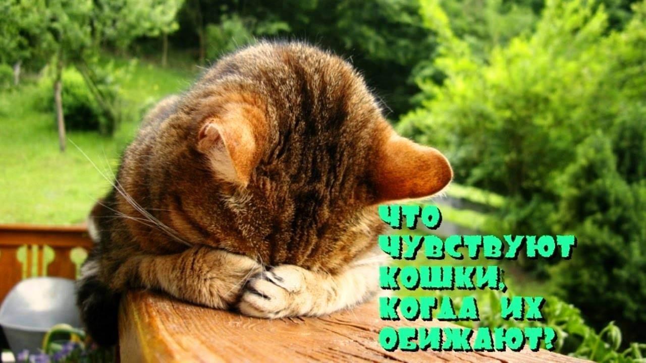 Что делать, если ваш кот заболел? какие основные признаки и симптомы? как понять, что питомец заболел? причины? как оказать помощь в домашних условиях? когда нужно обратиться к ветеринару?