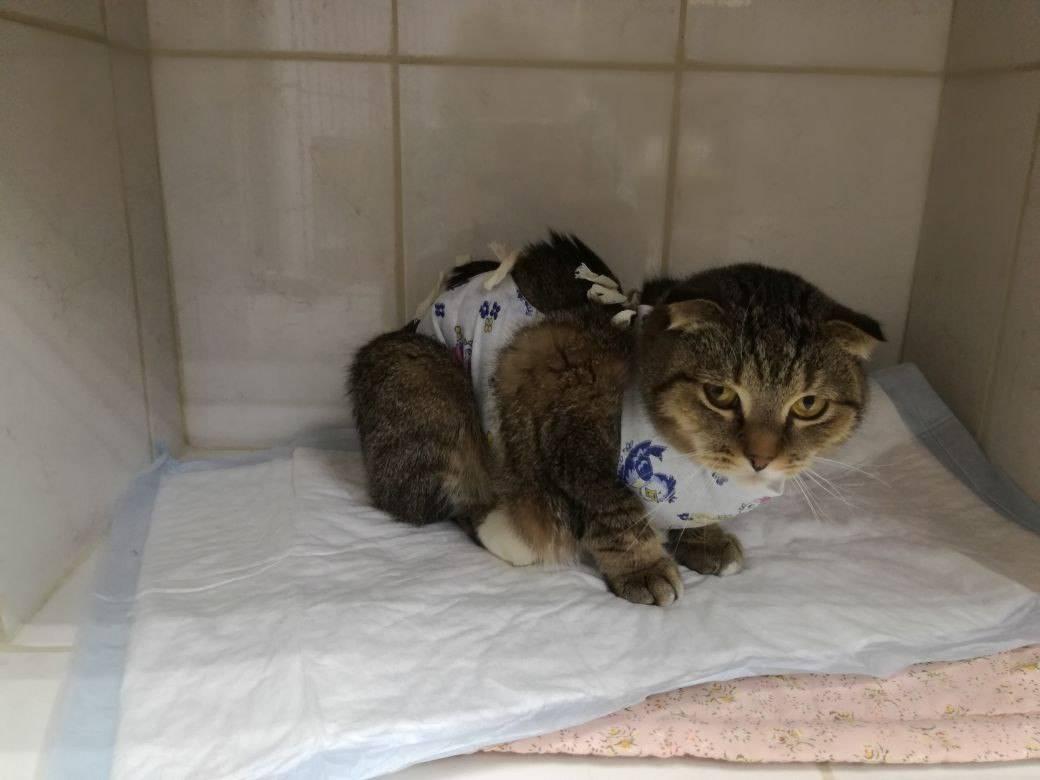 Кастрация котов и стерилизация кошек: плюсы и минусы. стерилизация кота