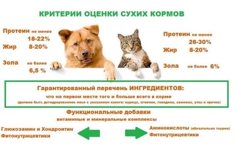Какие бывают классы сухих кормов для животных: классификация, характеристика по качеству и классам, какого класса корм — основные принципы оценки