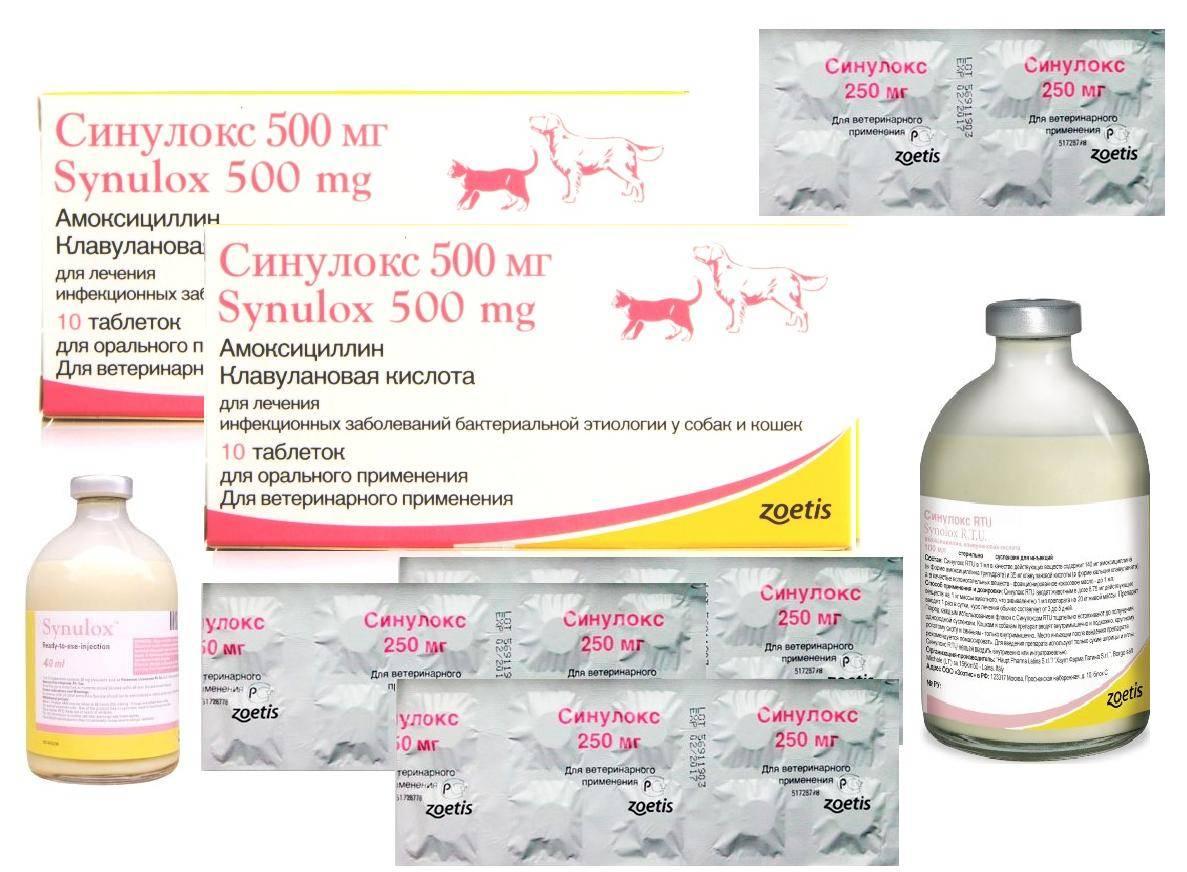 Лекарство для кошек ронколейкин — инструкция и отзывы