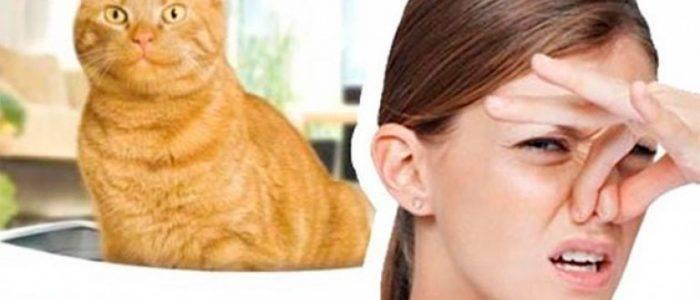 У кота сильно пахнет моча: почему и что делать, будет ли запах таким вонючим, если его кастрировать?