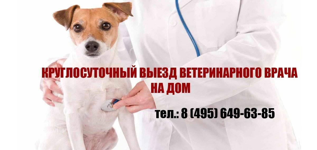 Ветеринарная помощь на дому в санкт-петербурге