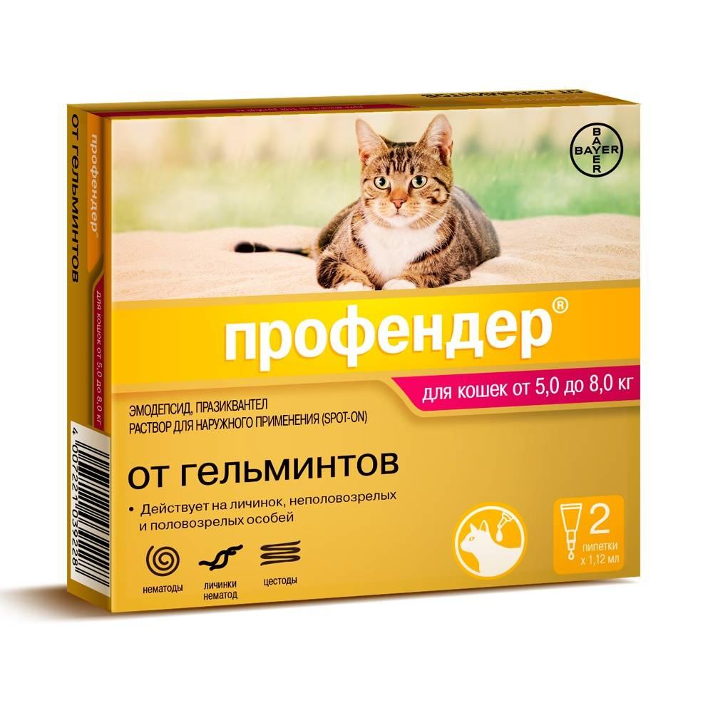 Капли на холку от глистов для кошек: обзор популярных средств, особенности применения, отзывы