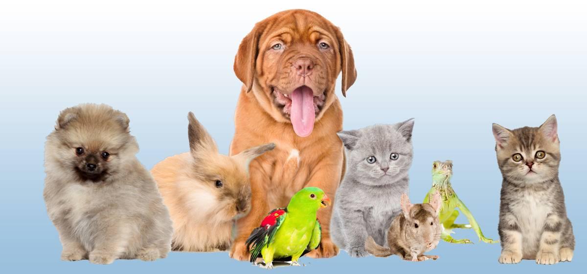 Какую породу кошек выбрать?