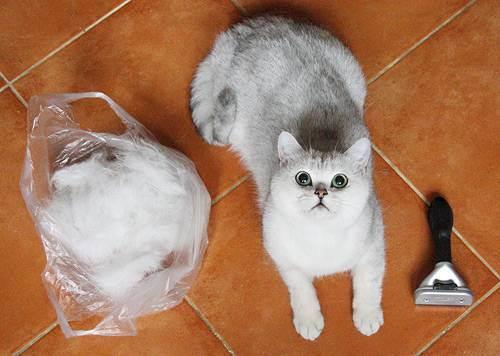 Что нужно делать, если кошку рвет?