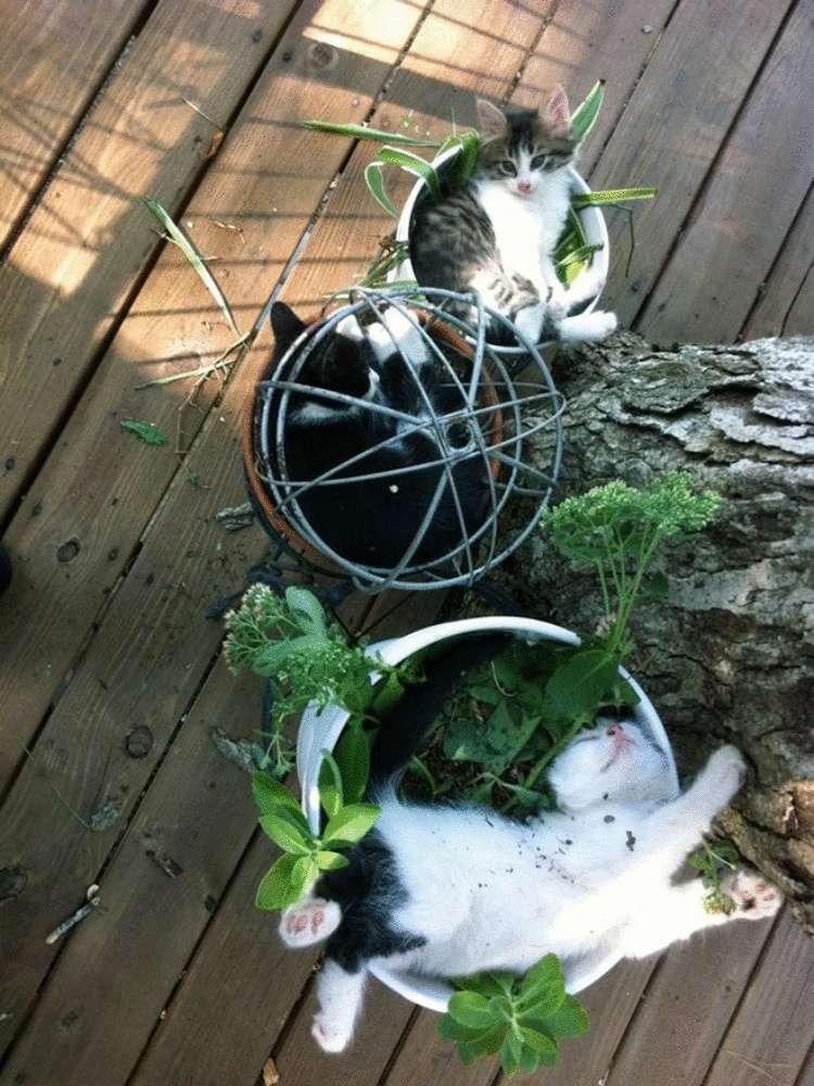 Как защитить цветы от кошки? спасаем комнатные растения