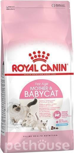 Чем кормить шотландских вислоухих кошек? правила питания котенка и кота в домашних условиях. можно ли давать им молоко?