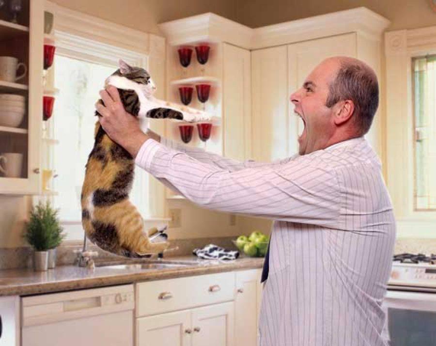 Можно ли целовать кошек домашних