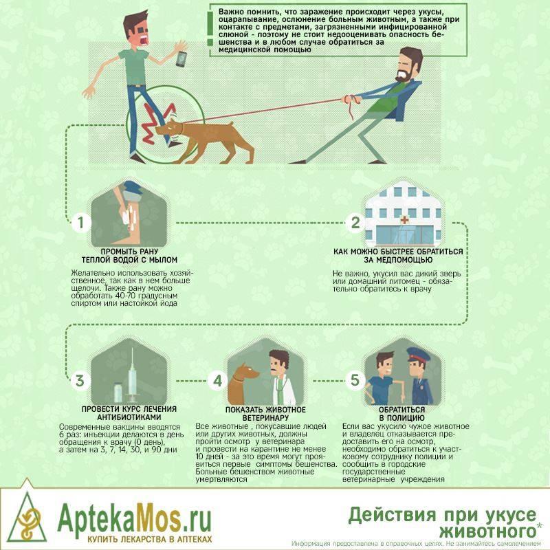 Укусила кошка: что делать после укуса кошки, лечение